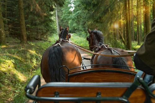 סוס ועגלה